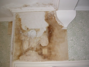 The water stain behind the wallpaper in the South Spare